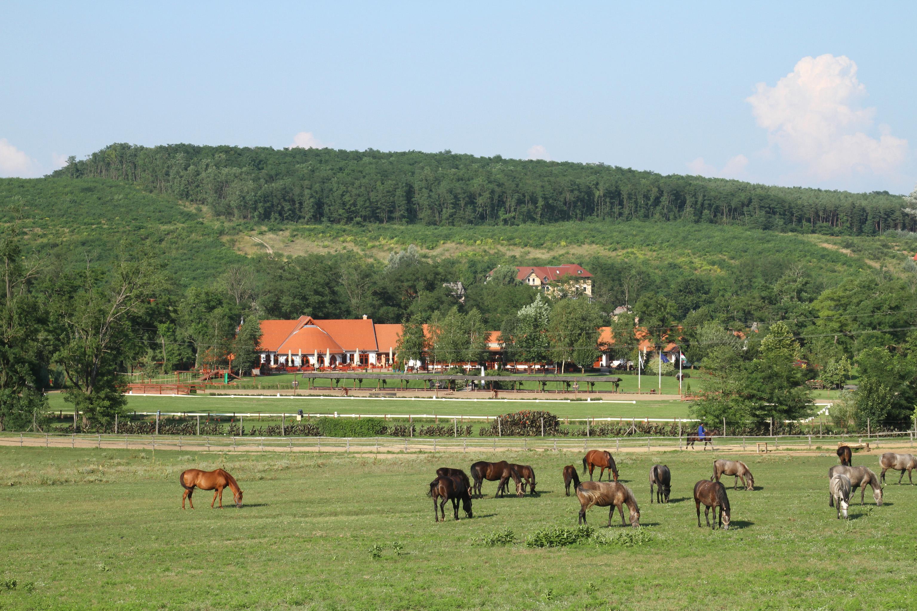 Lazar Equestrian Park Dinner Venue • Budapest, Hungary