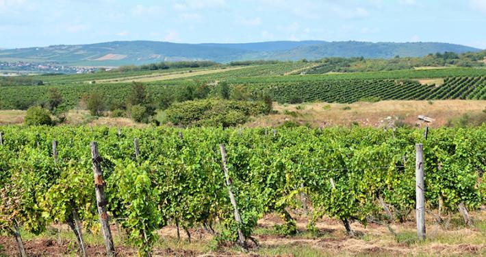 Tokaj Wine Region • Hungary