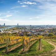 Vienna Panoramic Vineyards • Vienna, Austria